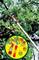 Крюк для веток WOLF-Garten RT-M - фото 8218