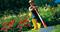 Обрезчик кромок газона Полумесяц с D-ручкой 85 см WOLF-Garten RM-F - фото 8261