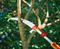 Пила профессиональная для сучков с телескопической ручкой WOLF-Garten RE-PM/ZM-V4 - фото 8283