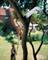 Пила профессиональная для сучков с телескопической ручкой WOLF-Garten RE-PM/ZM-V4 - фото 8284
