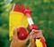 Сборщик фруктов с телескопической ручкой WOLF-Garden RG-M/ZM-V3 - фото 8301
